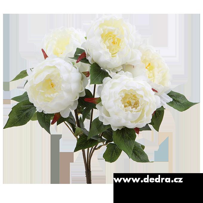 Pugét Pivoněk bílá výška 45 cm ateliérová květina