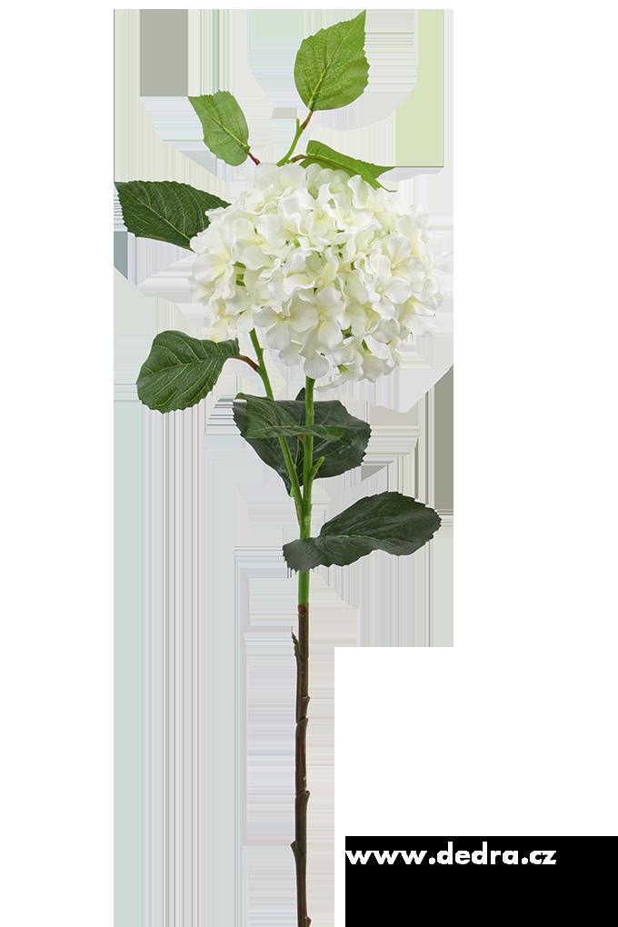 Hortenzie bílá výška 88 cm ateliérová květina