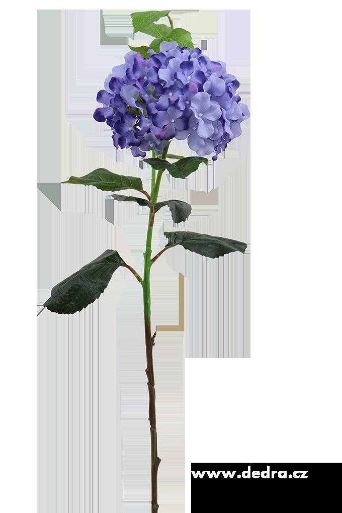 Hortenzie modrá výška 88 cm ateliérová květina