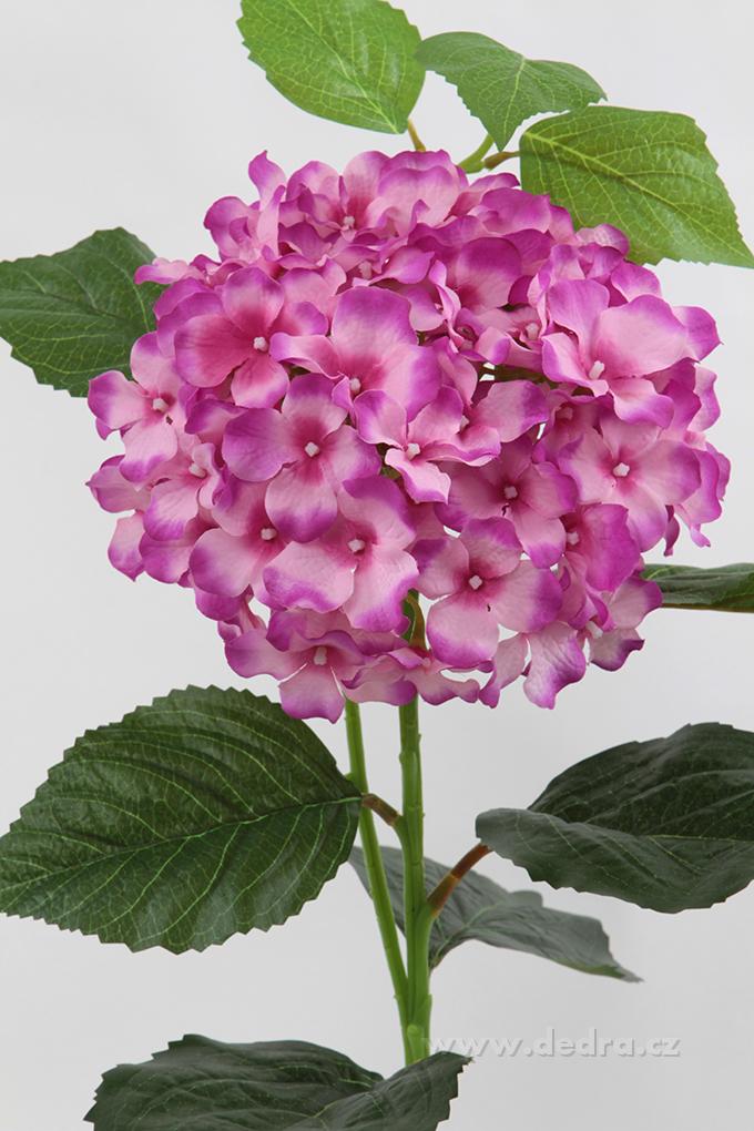 Hortenzie růžová, výška 88 cm