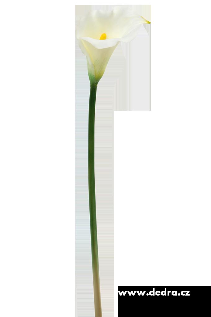 Calla bílá výška 77 cm ateliérová květina