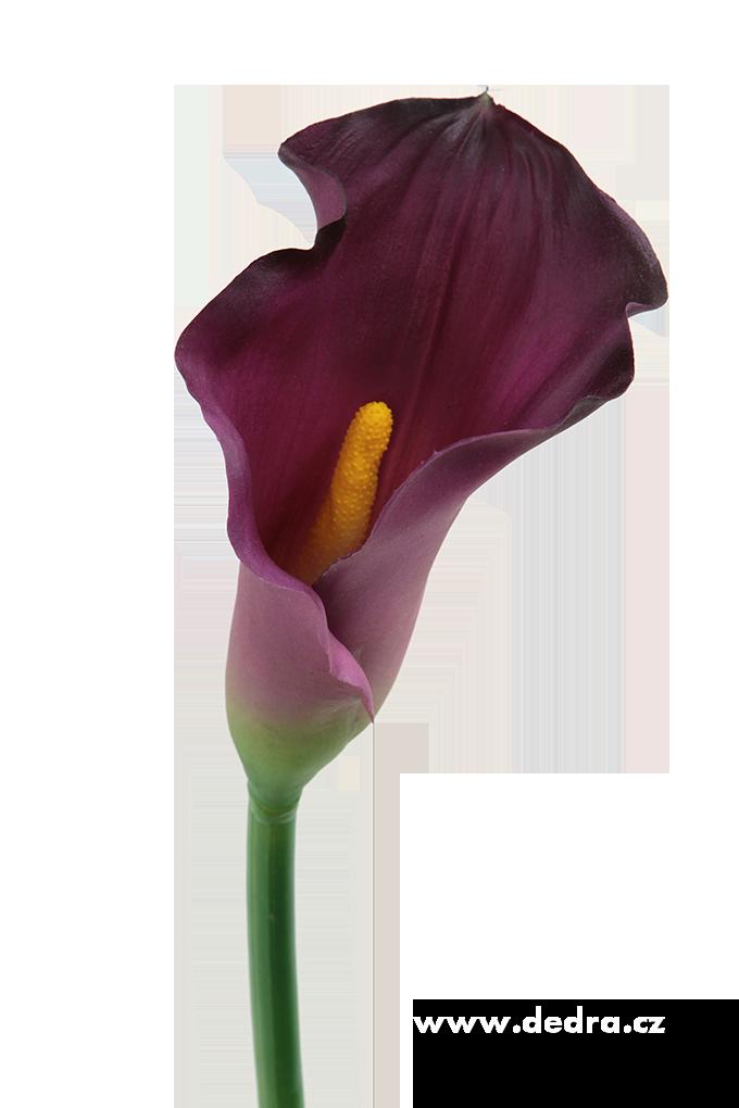 https://dedra.blob.core.windows.net/cms/ContentItems/17943_calla-tmave-fialova-vyska-77-cm-atelierova-kvetina/images/DA85672-a9a2f3b8387487b621e1fa480e50c13e.png