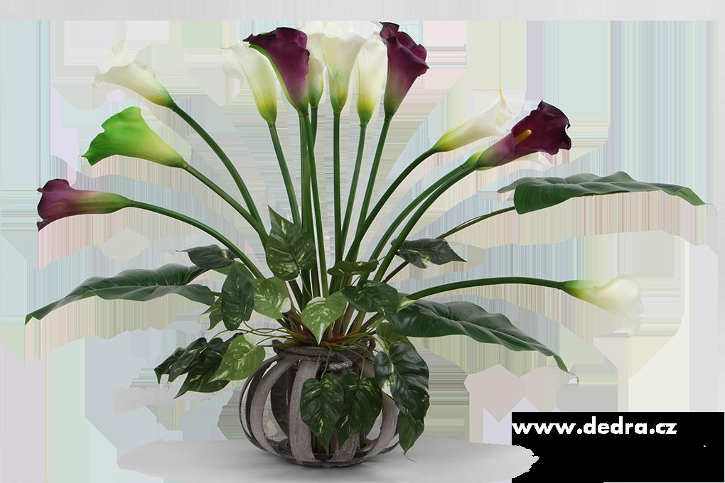 Calla tmavě fialová, výška 77 cm