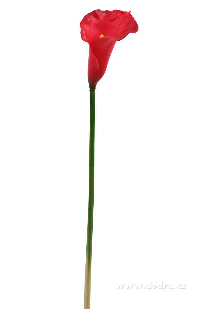 Calla červená výška 77 cm ateliérová květina