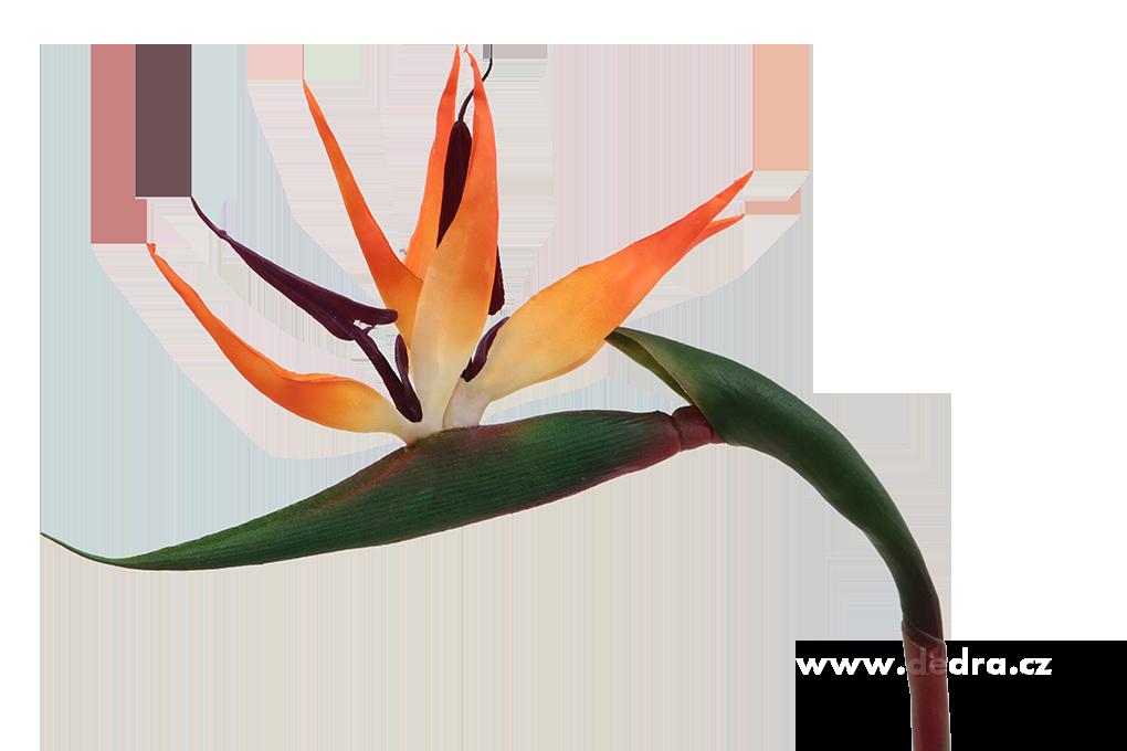 DA8568-Strelitzia výška 86 cm ateliérová kvetina