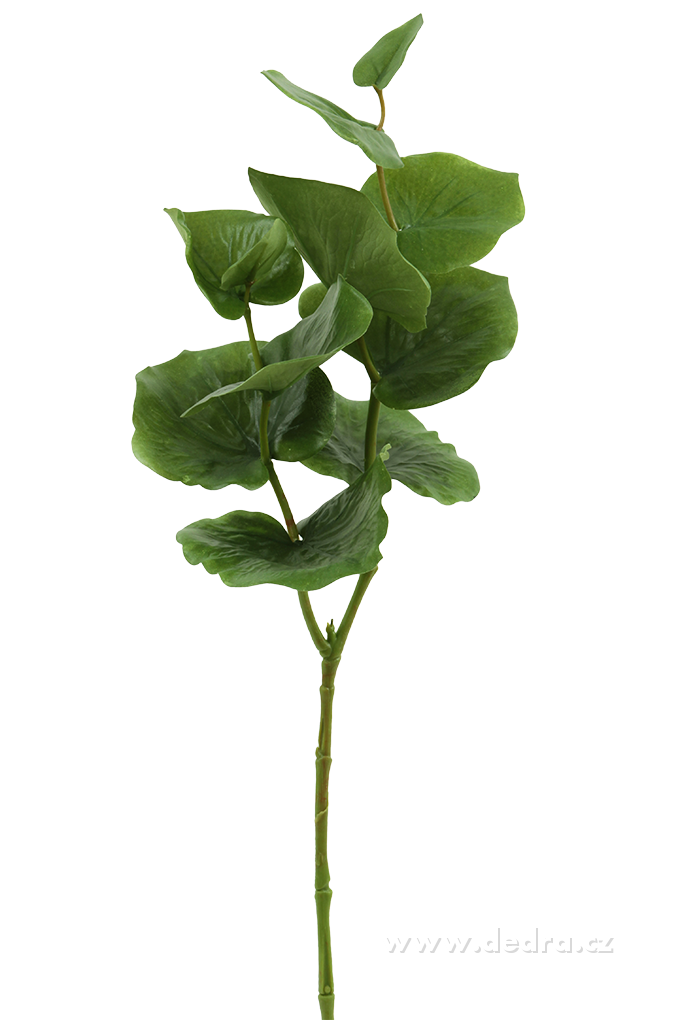 Zelené listy, výška 72 cm