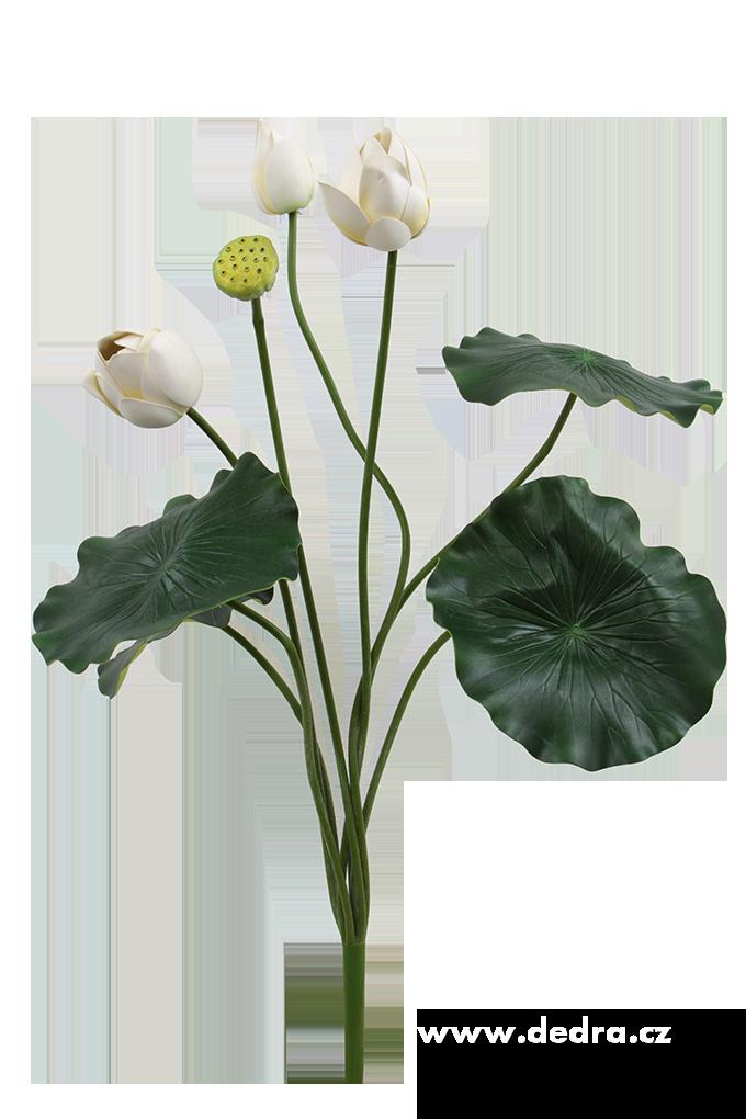 Lotosové soukvětí XXL bílé ateliérová květina