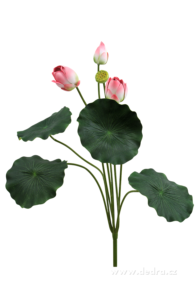 Lotosové soukvětí XXL růžové ateliérová květina