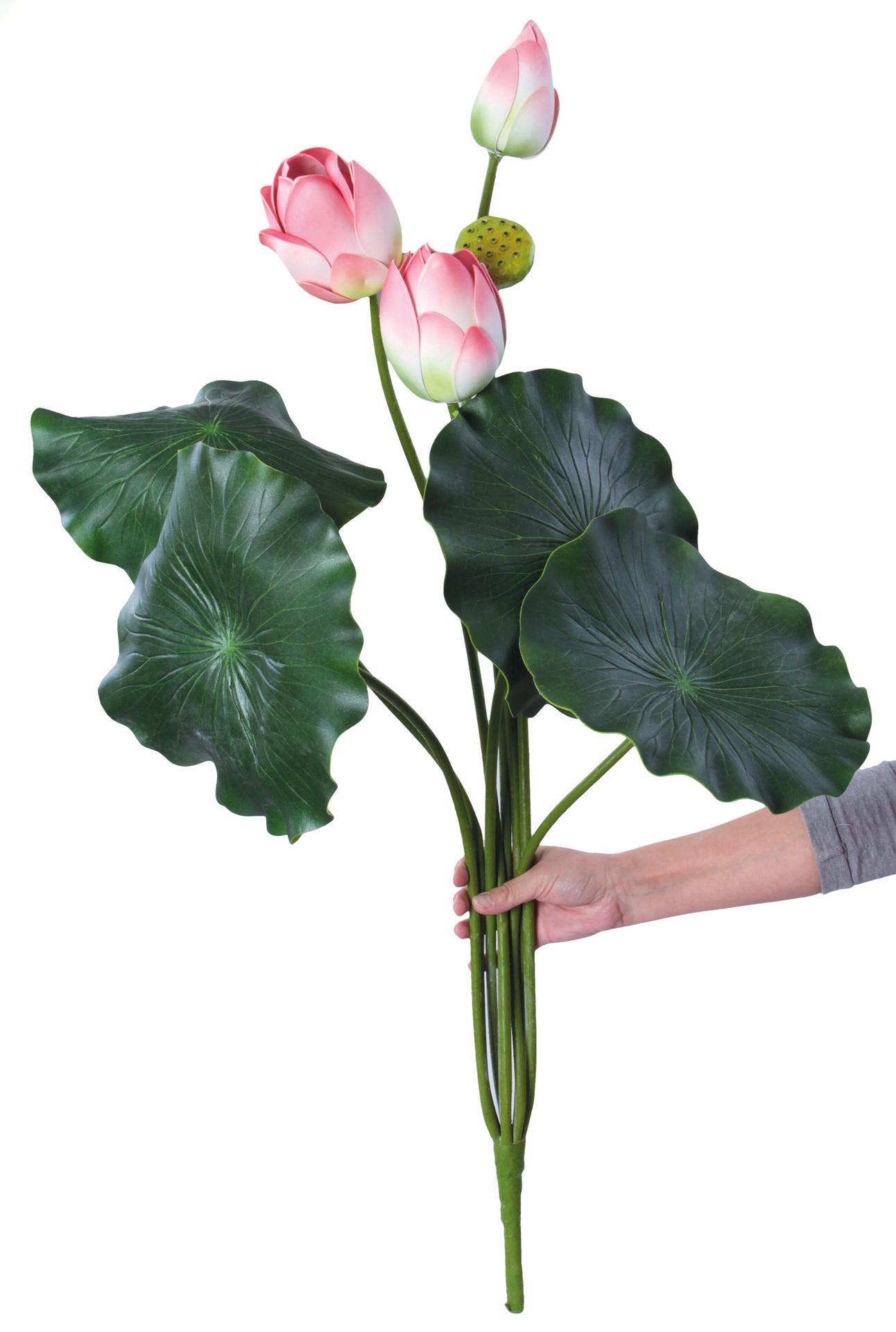 Lotosové soukvětí, XXL růžové