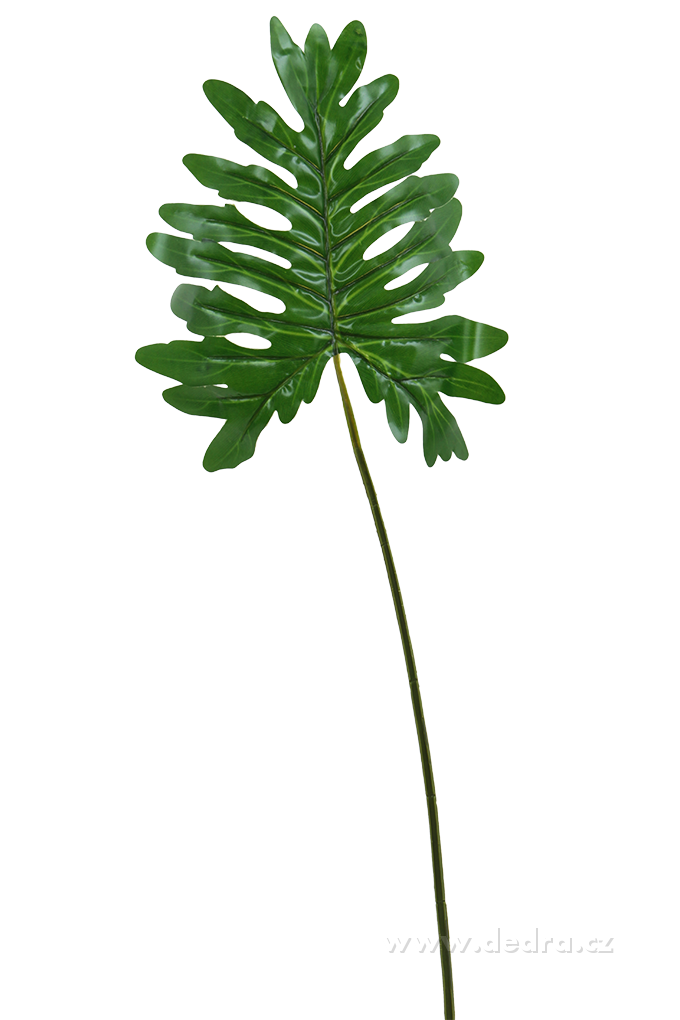 Monstera list výška 98 cm ateliérová květina