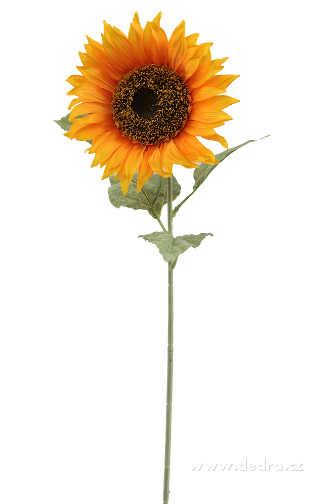 Slunečnice výška 80 cm ateliérová květina