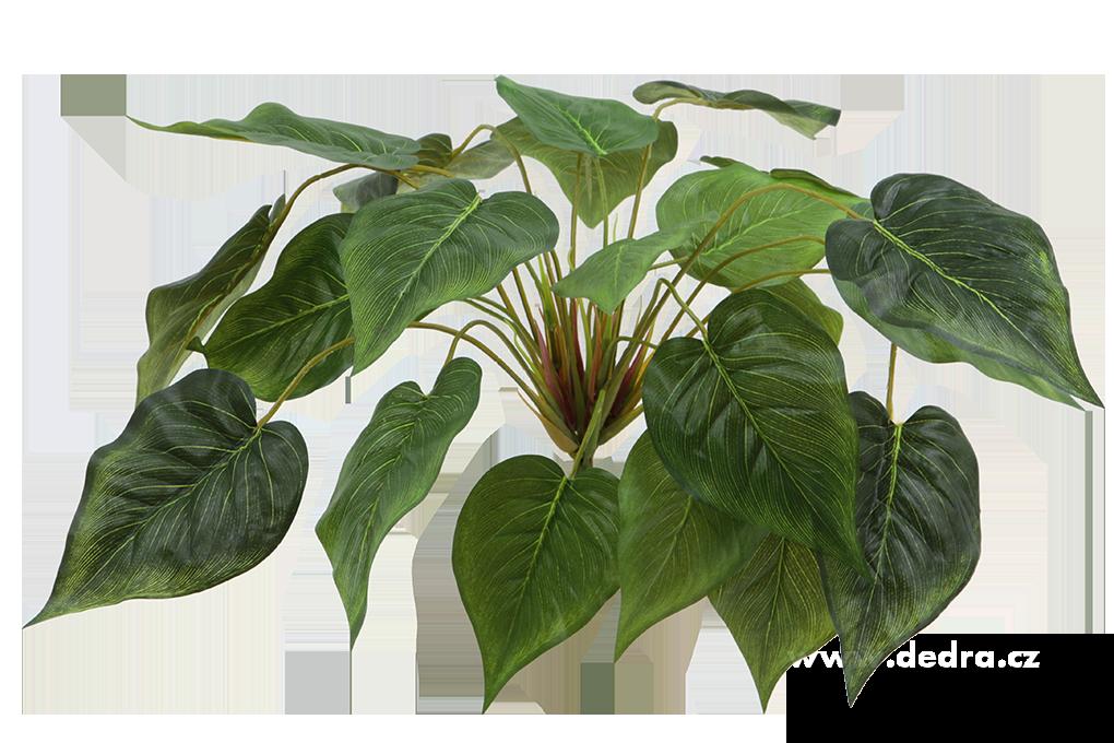Trs listů Pothos, zelený