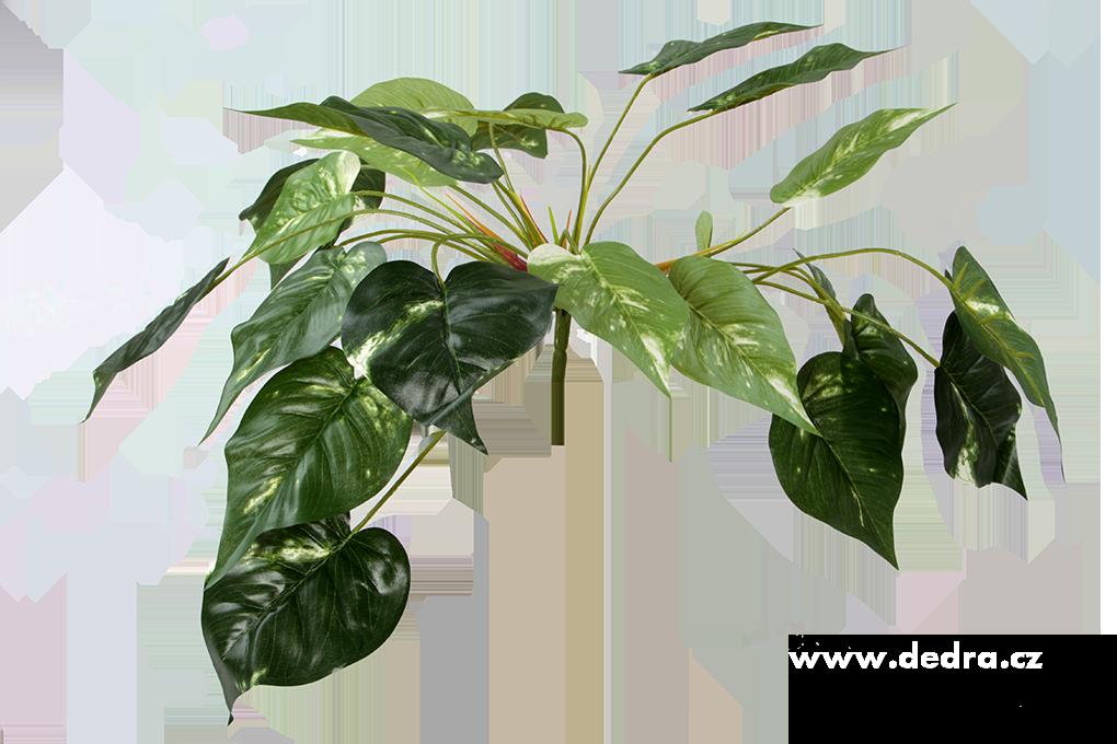 DA85752-Trs listov Pothos zel.s bielou kresbou ateliérová kvetina