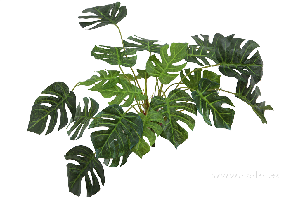 Trs listů Monstera, mini, výška 42 cm