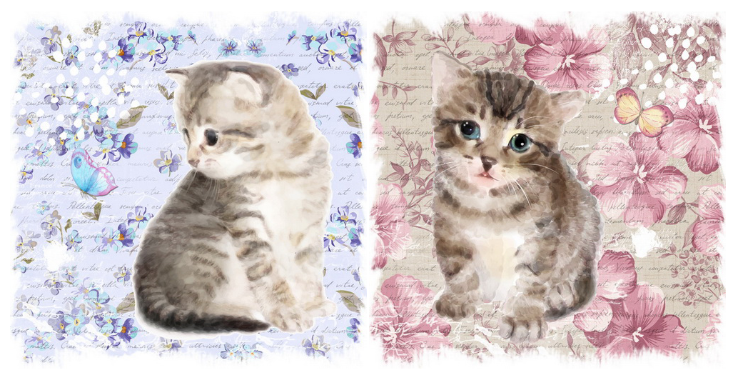 OBRAZ na plátne sada 2 ks 28x28 cm - Mačky
