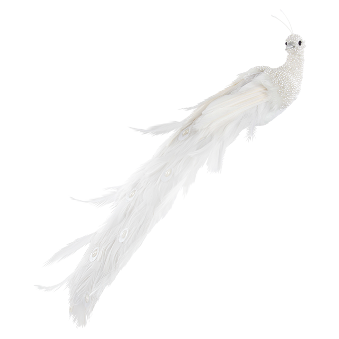 Bílý páv, se sametovým povrchem