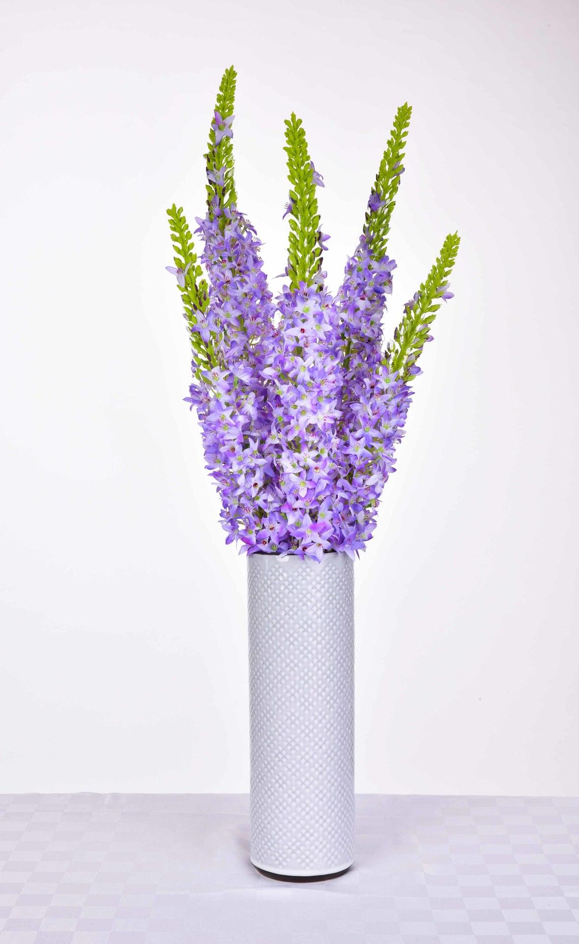 VERONICA modro-fialová, výška cca 130 cm