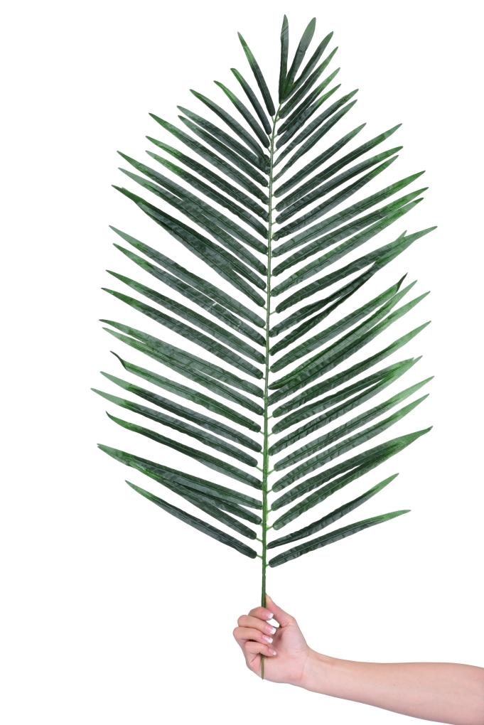 List AREKA, výška cca 98 cm