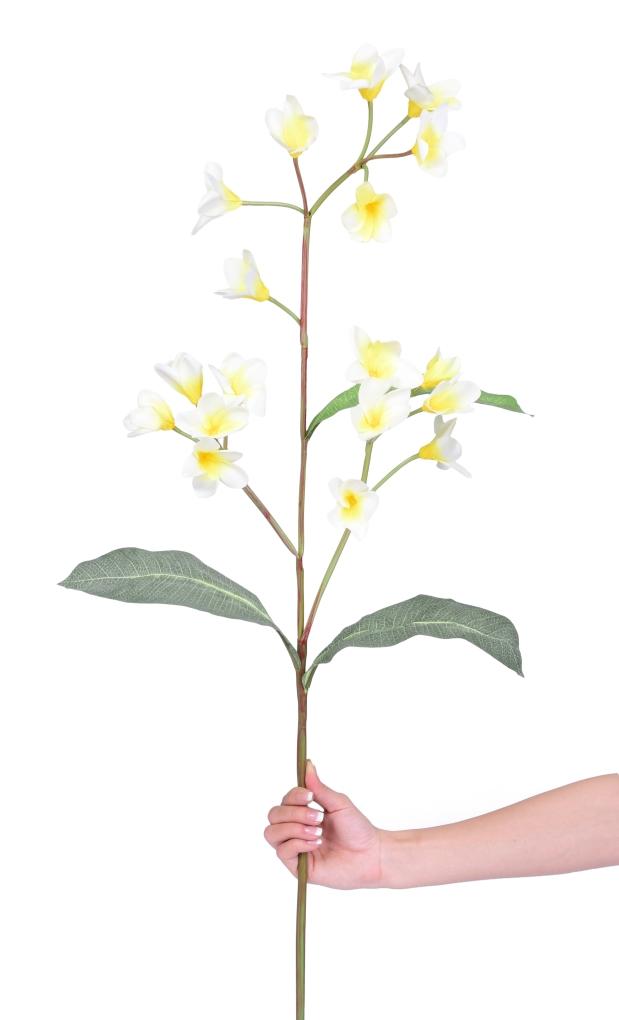 DA9839-Plumeria výška cca 105 cm ateliérová kvetina