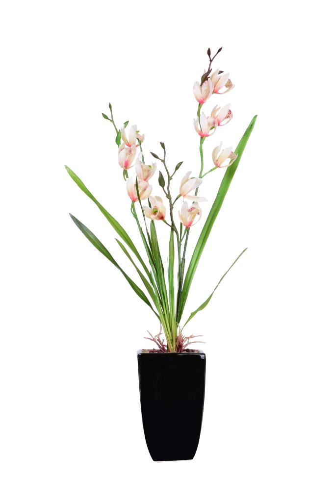 ORCHIDEA v květináči bílo-růžová ateliérová květina