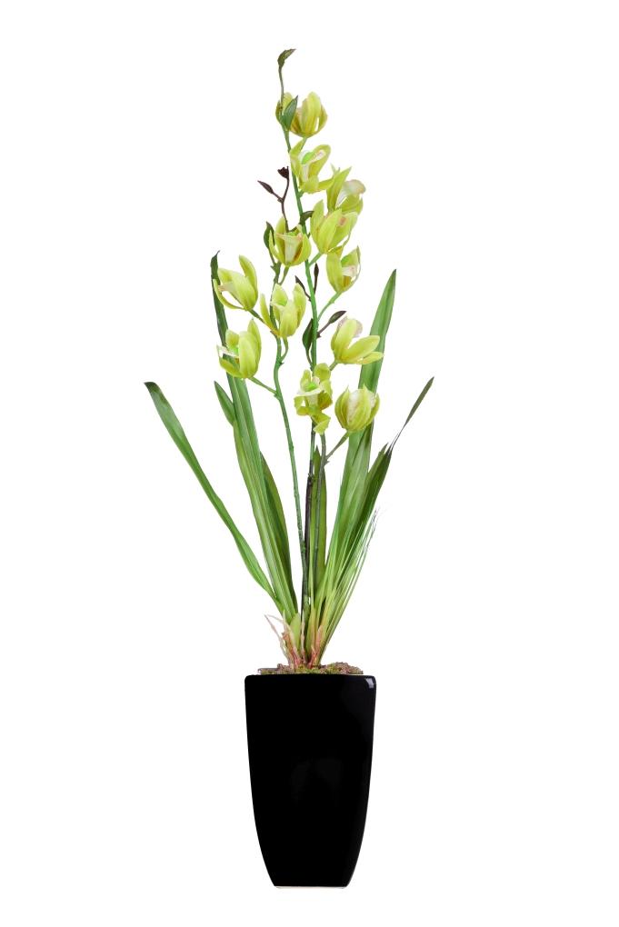 ORCHIDEA v květináči zelená ateliérová květina