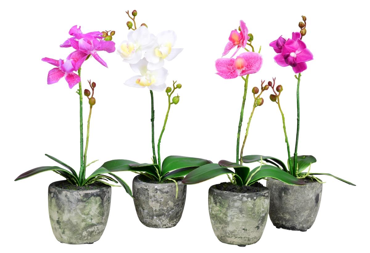 ORCHIDEA, v květináči, bílá