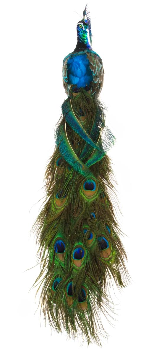 XL Paví král 70 cm  s pravými pavími pery