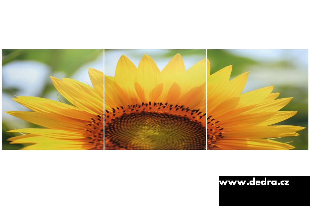 Sada 3 obrazůSUNFLOWER3x 60 x 60 cm