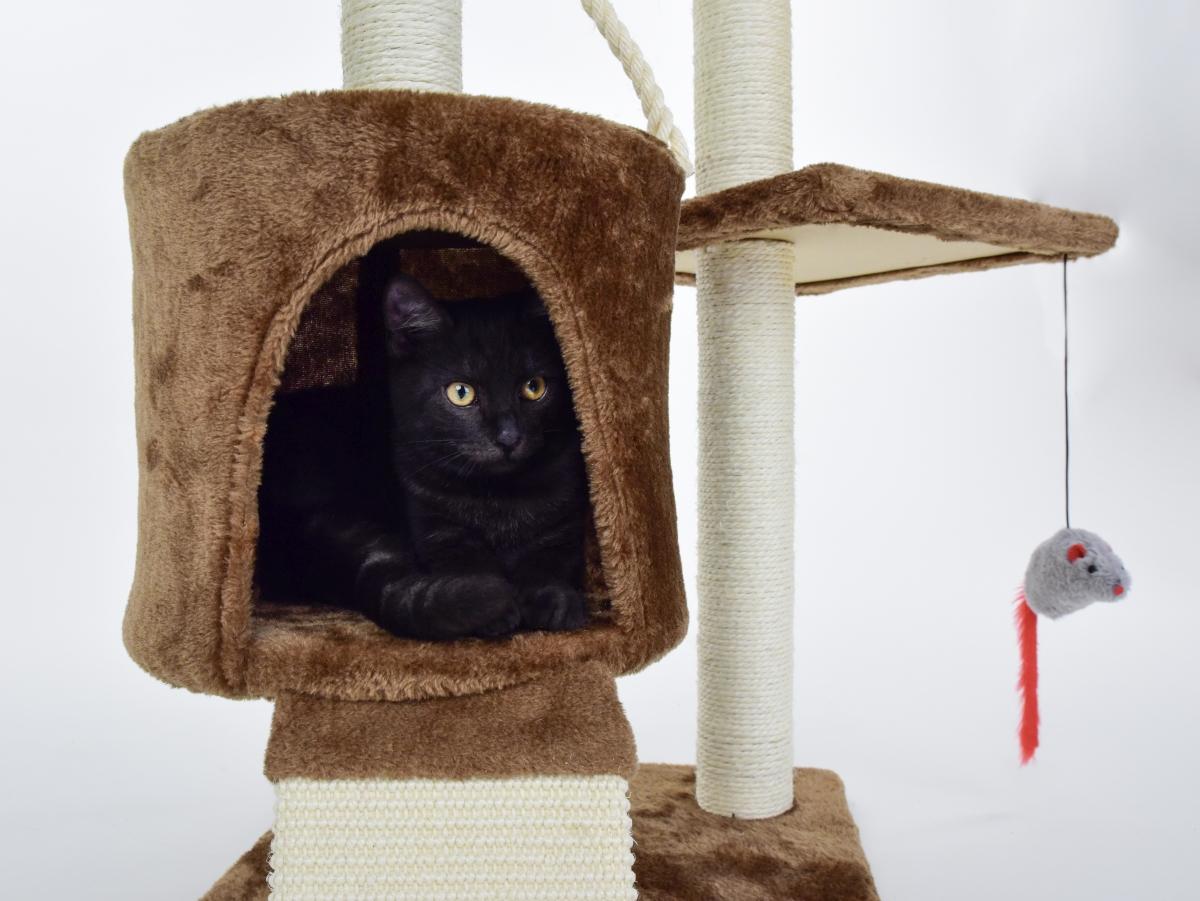 XL kočičí škrabadlo a prolézačka 122 cm