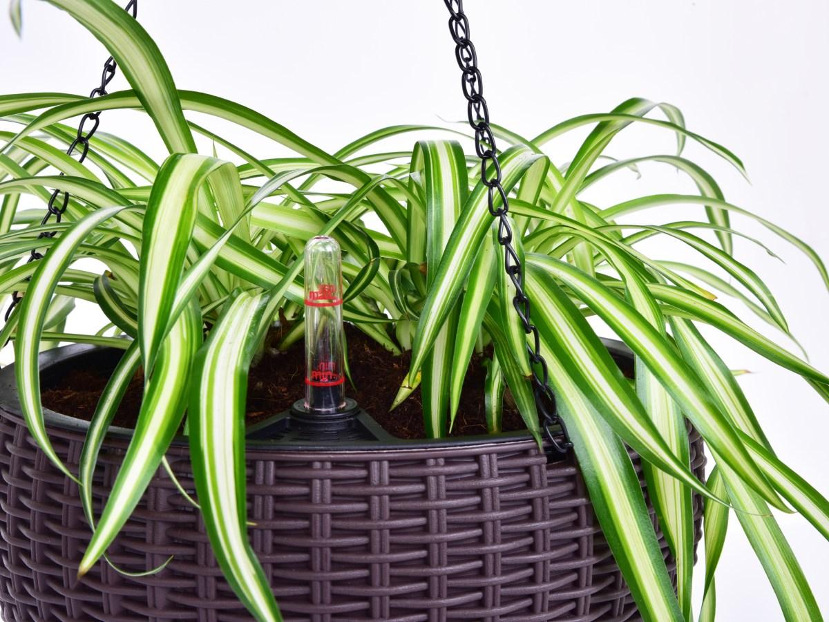 26 cm samozavlažovací závěsný květináč RATAN AQUARIUS