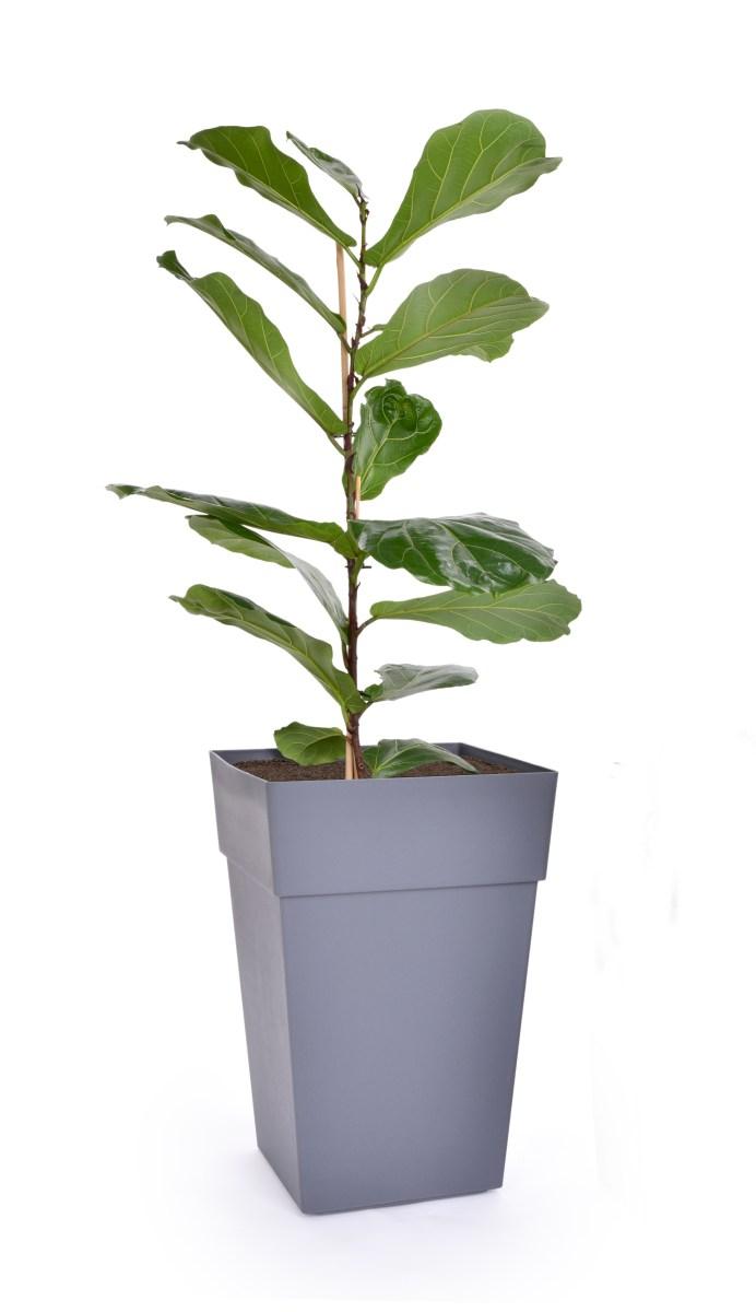 61 cm samozavlažovací květináč CUBE