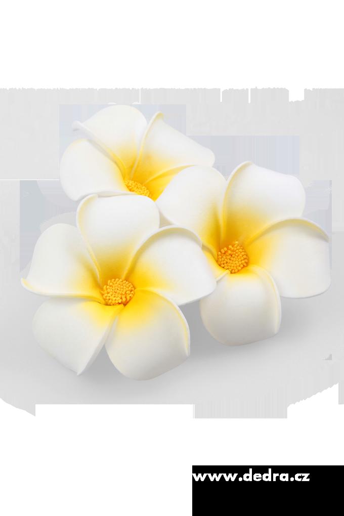 3ks dekorativní květ plumeria alba
