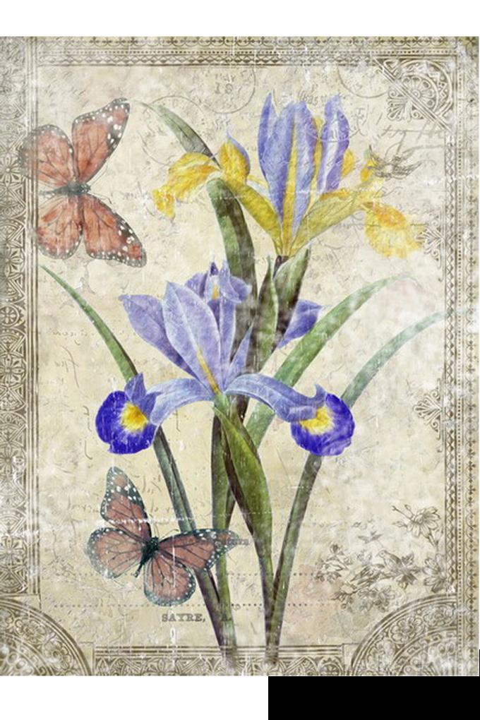 Obraz na plátně, 30 x 40 cm