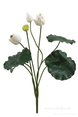 DA8573-Lotosové súkvetia XXL biele ateliérová kvetina