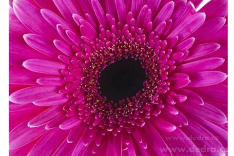 DA8014-Obraz na plátne 70 x 50 cm FUCHSIA FLOWER
